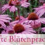 Spannband Dauerhafte Blütenpracht